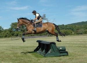 Cedar Crest Farm Equestrian Center | Horse Sale Listings